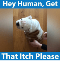 Memes, Humanity, and 🤖: Hey Human, Get  That itch Please Jiggle jiggle jiggle