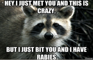 Crazy, Funny, and Rabies: HEY I JUST MET YOU AND THIS IS  CRAZY,  X  BUT IJUST BIT YOUAND I HAVE  RABIES  18 hours ago 10/10