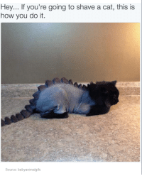 Dank, 🤖, and Cat: Hey... If you're going to shave a cat, this is  how you do it.  Source: babyanimalgifs