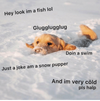 Lol, Memes, and Bear: Hey look im a fish lol  Glugglugglug  Doin a swim  Just a joke am a snow pupper  And im very cöld  pls halp Very cold 🥶 cr @lizzie.bear
