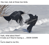 Yeah, Birds, and Crow: Hey man, look at those two birds.  Yeah, what about them?  It looks as if they're having a... CROW DOWN!  You're dead to me Eric.