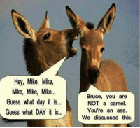#jussayin: Hey, Mike, Mike  Mike, Mike, Mike  Guess what day it is...  Guess what DAY it is...  Bruce, you are  NOT a camel.  You're an ass.  We discussed this #jussayin