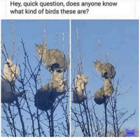 Catbirds: Hey, quick question, does anyone know  what kind of birds these are?  MEMES Catbirds
