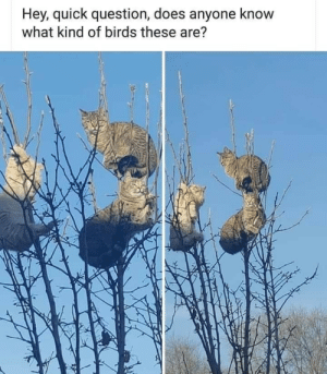 Anyone Know: Hey, quick question, does anyone know  what kind of birds these are?