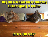 """Memes, 🤖, and Rif: """"Hey, Rif, when are these annoviny  humans going to  realize  this is OUR bedP"""