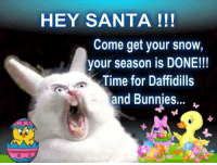 Bunnies, Memes, and Santa: HEY SANTA  Come get your snow,  your season is DONE!!!  Time for Daffidills  and Bunnies...