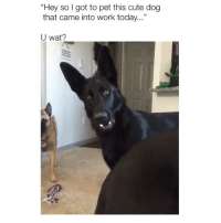 """Ugh: """"Hey so I got to pet this cute dog  that came into work today...""""  U wat? Ugh"""