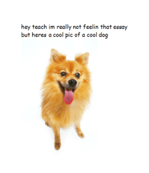Cool, Dog, and Cool Dog: hey teach im really not feelin that essay  but heres a cool pic of a cool dog