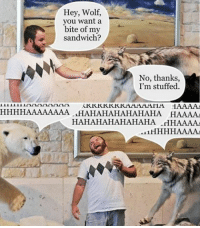Memes, Dad Jokes, and 🤖: Hey, Wolf,  you want a  bite of my  sandwich?  No, thanks  I'm stuffed.  KKKKKKKKAAAAAHA HAAAA  HHHHAAAAAAAA HAHAHAHAHAHAHA HAAAAA  HAHAHAHAHAHAHA .HHAAAA  AL1 Exactly what a dad joke should be. Follow @9gag @9gagmobile 9gag pun