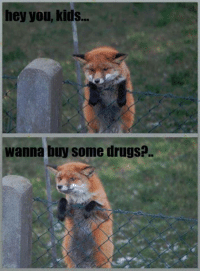 "<p>What does the fox say? via /r/memes <a href=""http://ift.tt/2pmLt2P"">http://ift.tt/2pmLt2P</a></p>: hey you, kids..  wanna buy some drugs?. <p>What does the fox say? via /r/memes <a href=""http://ift.tt/2pmLt2P"">http://ift.tt/2pmLt2P</a></p>"