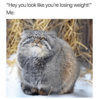 "Girl Memes, Thx, and Double: ""Hey you look like you're losing weight!"" My double chin says thx"