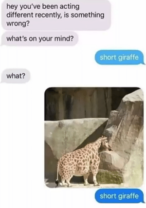 Giraffe, Acting, and Mind: hey you've been acting  different recently, is something  wrong?  what's on your mind?  short giraffe  what?  short giraffe