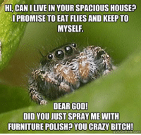 """<p>Misunderstood Spider.<br/><a href=""""http://daily-meme.tumblr.com""""><span style=""""color: #0000cd;""""><a href=""""http://daily-meme.tumblr.com/"""">http://daily-meme.tumblr.com/</a></span></a></p>: HI, CANILIVE IN YOUR SPACIOUS HOUSE?  IPROMISE TO EAT FLIES AND KEEP TO  MYSELF  DEAR GOD!  DID YOU JUST SPRAY ME WITH  FURNITUREPOLISHYOU CRAZY BITCH!  quickmeme.com <p>Misunderstood Spider.<br/><a href=""""http://daily-meme.tumblr.com""""><span style=""""color: #0000cd;""""><a href=""""http://daily-meme.tumblr.com/"""">http://daily-meme.tumblr.com/</a></span></a></p>"""
