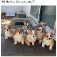 "Memes, Gang, and Jumped: ""Hi, do you like our gang?"" Now that's a gang that can jump me 😍"