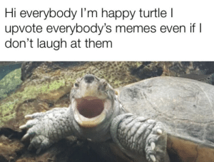 Memes, Reddit, and Happy: Hi everybody I'm happy turtle I  upvote everybody's memes even if I  don't laugh at them Have a nice day