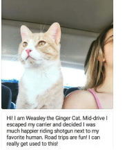 Cats, Cute, and Dogs: Hi! I am Weasley the Ginger Cat. Mid-drivel  escaped my carrier and decided I was  much happier riding shotgun next to my  favorite human. Road trips are fun! I can  really get used to this! Submitted by @hungryheart86 cat cats catsofinstagram kitten kittens kitty kitties funny dog fun dogs dogsofinstagram doggy doggie doggies funnydog pets gato petsofinstagram animal cute puppies pup puppy katze puppiesofinstagram cat_shaming catstagram pet kittensofinstagram