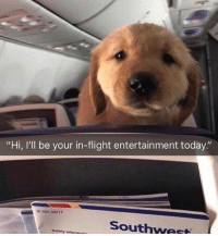 "Flight, Southwest, and Today: ""Hi, I'll be your in-flight entertainment today.""  -551-08/17  Southwest  Safety"