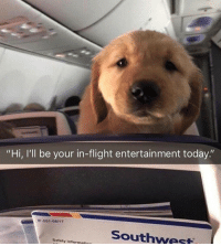 """The flight went from economy to first class with entertainment like this: """"Hi, I'll be your in-flight entertainment today.""""  -551-08/17  Southwest  Safety informati The flight went from economy to first class with entertainment like this"""