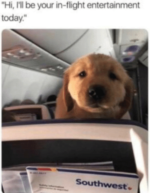 """Southwest: """"Hi, I'll be your in-flight entertainment  today.""""  Southwest"""