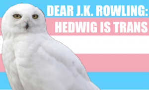 Hi, I'm Liz, I'm new here. Hedwig is trans and there's nothing J.K. Rowling can do about it.: Hi, I'm Liz, I'm new here. Hedwig is trans and there's nothing J.K. Rowling can do about it.
