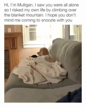 Being Alone, Climbing, and Life: Hi, I'm Mulligan. I saw you were all alone  so I risked my own life by climbing over  the blanket mountain. I hope you don't  mind me coming to snoozle with you  Th https://t.co/gSwfJE3uWW