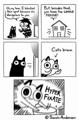 Cats, Love, and Memes: Hi, my love. I blockedBt besides that,  this spot because itsyou  dangerous to you  have the WHOLE  HOUSE!  To you.  Cats brain  FixATE  O Sarah Andersen