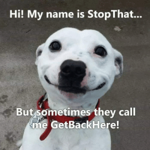 Hi My Name Is: Hi! My name is StopThat...  But sometimes they call  ne GetBackHere!