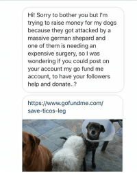 hi got this dm. Plz donate. Link in Bio.: Hi! Sorry to bother you but I'm  trying to raise money for my dogs  because they got attacked by a  massive german shepard and  one of them is needing an  expensive surgery, so I was  wondering if you could post on  your account my go fund me  account, to have your followers  help and donate..?  https://www.gofundme.com/  save-ticos-leg hi got this dm. Plz donate. Link in Bio.