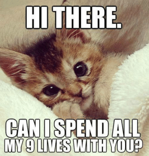 Memes, 🤖, and All: HI THERE.  CANISPEND ALL  MY 9 LIVES WITH YOU?