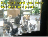 Memes, 🤖, and Pasta: Hi/we heard you  UI_VAye re  Where  baking tuna pasta.  DalCling tu na-Dasta