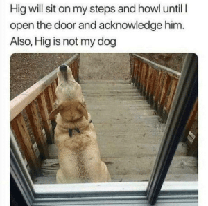 Dog, Him, and Via: Hig will sit on my steps and howl until l  open the door and acknowledge him.  Also, Hig is not my dog Hig is a goodboy via /r/wholesomememes https://ift.tt/2UamLST