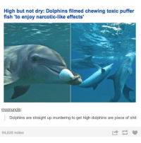 Relatable, Toxic, and Puffer Fish: High but not dry: Dolphins filmed chewing toxic puffer  fish to enjoy narcotic-like effects  moonuncle:  Dolphins are straight up murdering to get high dolphins are piece of shit  94,626 notes look how high they are