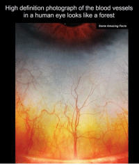 human eyes: High definition photograph of the blood vessels  in a human eye looks like a forest  Some Amazing Facts