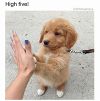 Memes, 🤖, and Skins: High five!  DrSmashlove It happened again! I'm telling y'all my luck is the worst! I'm on the damn stairmaster this morning getting it in and I'm on the next episode of Black Mirror and the soldier is reminiscing on his beautiful caramel skin wife-girlfriend-love interest and she's full nudie full tetas out and the fine ass older brunette lady on the stairmaster next to me doing her whole weird-ass stairmaster workout u ladies do where she kicking her legs out and kicking her legs back and just overall doing the absolute most and she peek over and bam - she watching it too - and then the girlfriend on the screen multiplies and the soldier is banging four of them! Well I got my wish. An orgy DID come on my screen - Netflix u damn perverts smh smh. I can't catch NO break. Ayeeeeee...The lady ain't bat an eye tho. Low key? I think she liked it ... she looked at my screen ... I looked at her ... she grinned for half a second, and then looked down ... I think she like me 😍 YouLadiesTurnFortyAndSomethingClicks YallAfraidToAge ButDontRealizeThatYouHitForty AndYoPussyGoIntoOverdriveMode GodBlessYouWomenTho SexualCreaturesTillDeath 😍😂😂😂