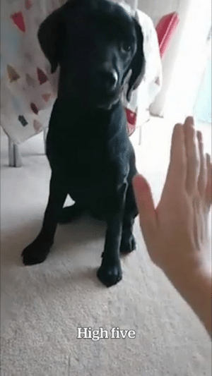 """I don't think our dog has mastered paw just yet..."" 😍😂: High five ""I don't think our dog has mastered paw just yet..."" 😍😂"