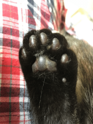 High Five, Five, and High: High five the polydactyl beans!