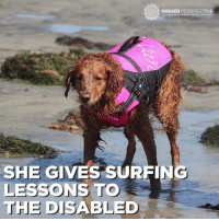 RICOCHET THE SURFING DOG 😱😱😱: HIGHER PERSPECTIVE  CONNECT REVEAL TEAN CENDY  SHE GIVES SURFING  LESSONS TO  THE DISABLED RICOCHET THE SURFING DOG 😱😱😱