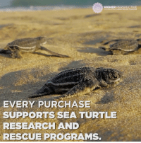 Memes, Turtle, and Programming: HIGHER PERSPECTIVE  EVERY PURCHASE  SUPPORTS SEA TURTLE  RESEARCH AND  RESCUE PROGRAMS SAVE THE TURTLES 🐢 😍 🐢 😍