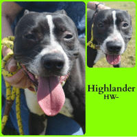 Memes, 🤖, and Php: Highlander  HW. *Please note this animal is not with AAVA - we are networking for rescue as the liaison for the shelter* This baby is in a kill shelter in Abbeville, LA which does not allow public adoptions. Animals must be pulled by an approved rescue or can be adopted through AAVA.  TO ADOPT - fill out an application at http\://aavarescue.com/adoptions.php  RESCUES - all rescues must now go through AAVA. Please contact us at animalaidvermilion@gmail.com. If you are not already approved please fill out a rescue application at http\://aavarescue.com/rescues.php  TO FOSTER - fill out an application at http\://aavarescue.com/volunteer.php  If you have any questions please contact us at animalaidvermilion@gmail.com or (337) 366-0212 or visit our website http\://aavarescue.com for more information.  To donate to AAVA's general rescue fund which helps support the shelter animals needs visit this link paypal.me/animalaidvermilion or visit our website http\://aavarescue.com/support-our-rescue.php Shelter needs can include items such as laundry detergent, baby pools, flea medication, dawn soap, heaters and fans, toys, gas for transports, pull fees for unfunded animals and other types of items.