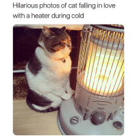 Funny, Love, and Pictures: Hilarious photos of cat falling in love  with a heater during cold These pictures will make your day better (@tanryug)