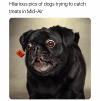 Dogs, Funny, and Photography: Hilarious pics of dogs trying to catch  treats in Mid-Air Their reactions are priceless 😂 (@vieler.photography)