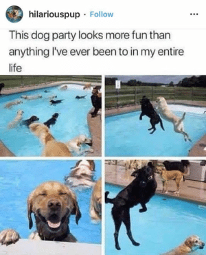 Life, Memes, and Party: hilariouspup Follow  This dog party looks more fun than  anything I've ever been to in my entire  life