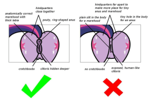 How to ACCURATELY draw horse pussy: hindquarters  close together  hindquarters far apart to  make more place for tiny  anus and marehood  anatomically correct  marehood with  thick labia  lain slit in the body  for a marehood  tiny hole in the body  for an anus  pouty, ring-shaped anus  exposed, human-like  clitoris  crotchboobs  clitoris hidden deeper  no crotchboobs How to ACCURATELY draw horse pussy