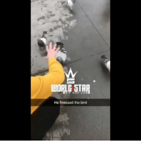 Dude, Memes, and Wshh: HIP HOP.COM  He finessed the bird Dude just grabbed the pigeon 😳🐦 WSHH (via @ryanelyasi7 @jamienahamou)