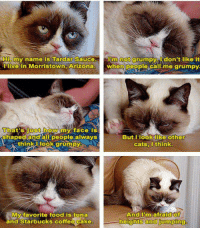 Poor misunderstood kitty.  ~ Evy: Hip my name is Tardar Sauce  inn not don't like it  grumpy I live in Morristown, Arizona  when poeple cali me That's just howAmy face is  shaped and all people always  But I look like other  think look grumpy  cats, I think  And I'm afraid of  My favorite food is tuna  and Starbucks coffee Cake  -heights and jumping Poor misunderstood kitty.  ~ Evy