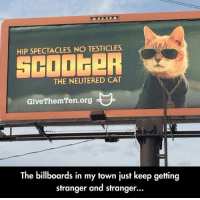 Cat, Org, and Testicles: HIP SPECTACLES, NO TESTICLES  SCOOGeR  THE NEUTERED CAT  GiveThemTen.org  The billboards in my town just keep getting  stranger and stranger  .. <p>Vet Billboards.</p>