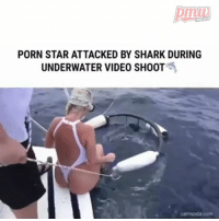 Memes, Shark, and Link: HIPHOP  PORN STAR ATTACKED BY SHARK DURING  UNDERWATER VIDEO SHOOT Porn actress gets bitten by shark while filming due to poor cage arrangemnts. - FULL VIDEO AND STORY AT PMWHIPHOP.COM LINK IN BIO @PMWHIPHOP @PMWHIPHOP @PMWHIPHOP @PMWHIPHOP @PMWHIPHOP @PMWHIPHOP