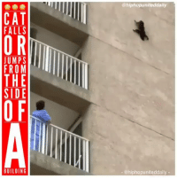 Memes, 🤖, and Cat: @hiphopuniteddaily  CAT  FALLS  JUMPS  FROM  0  THE  SIDE  BUILDING  - @hiphopuniteddaily -