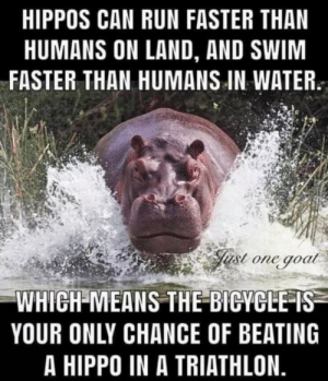 Run, The More You Know, and Goat: HIPPOS CAN RUN FASTER THAN  HUMANS ON LAND, AND SWIM  FASTER THAN HUMANS IN WATER  ust one goat  WHICH MEANS THE BICYCLE IS  YOUR ONLY CHANCE OF BEATING  A HIPPO IN A TRIATHLON. The More You Know