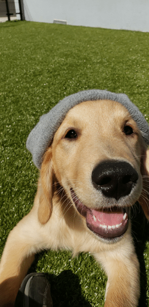 Hipster puppy totes loves you!